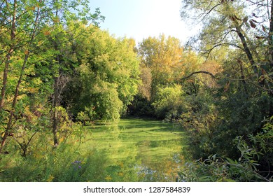 Overgrown pond in forest