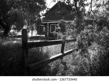 Overgrown Ranch House Fence