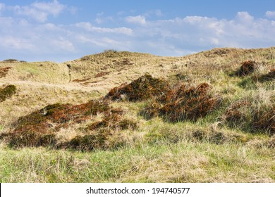 Overgrown sand dunes at the North Sea in Norderney, Germany.