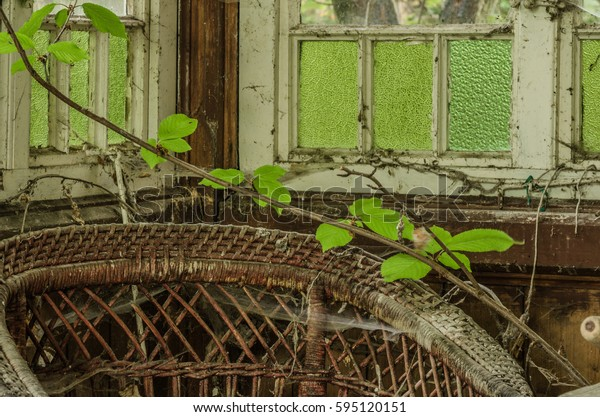 overgrown terrace in old house