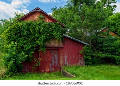Overgrown vines on a deserted barn in rural Sussex County New Jersey.