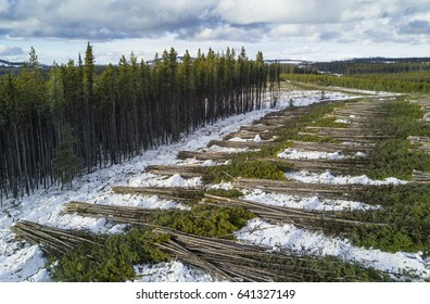 An overhead drone photo of  clear cut logging in progress