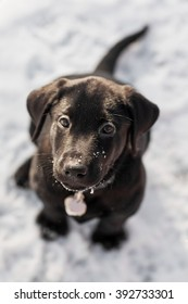 Overhead shot of a black lab puppy in the snow.