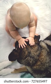 Overhead view of a 6 month old baby petting her rescued German Shepherd Mix breed dog on the ears.