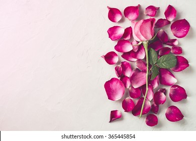 Overhead view of Beautiful pink rose and petals on cement floor, Valentine's day concept