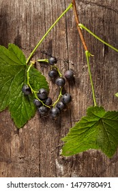 Overhead view of branch of blackcurrant on wooden background. Studio lighting. Healthy eating concept