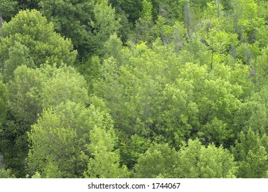 Overhead view of green treetops
