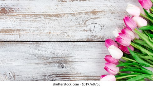 overhead view of a spring pink tulips on white weathered wooden boards