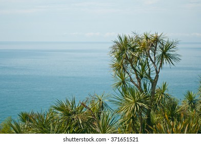 Overlooking the Black Sea in Georgia from a height through the leaves of palm trees