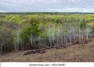 overlooking forest during springtime at flandrau state park in new ulm minnesota
