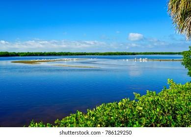 "Overlooking lake at J. N. ""Ding"" Darling National Wildlife Refuge in Sanibel Island Florida 1"