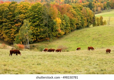 Overlooking a peaceful New England Farm in the autumn, Woodstock, Vermont, USA