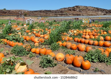 Overlooking a pumpkin patch on a sunny autumn day at Tanaka Farms in California