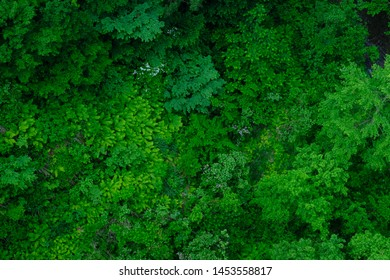 Overlooking scenery of a lush forest with various foliage