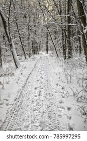 An overnight snowfall attracted snowmobilers to this pretty path in a wooded area about quarter of mile from the north shore of Lake Erie, near Windmill Point in Greater Fort Erie.