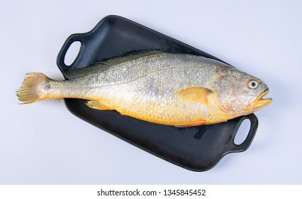 Overshot white background big yellow croaker