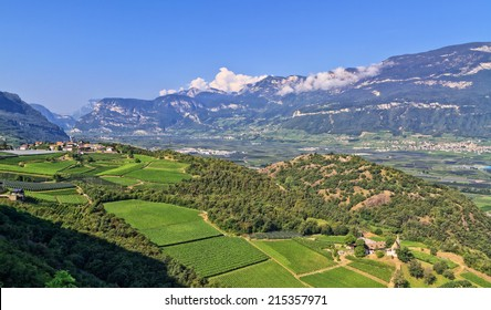 Overview of Adige Valley with vineyard on foreground, Italy