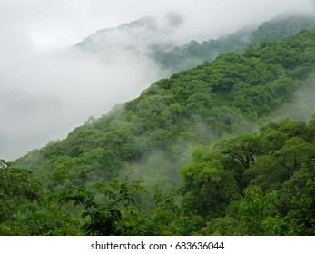Overview of the cloud forest in the early morning mist. Aerial photo of the bright vegetation covering the mountainsides. The picture was taken in Salta, Argentina