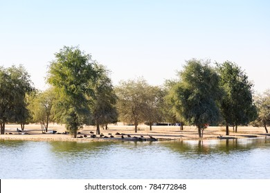 An overview of man made Al Qudra Lake and Oasis in Dubai.