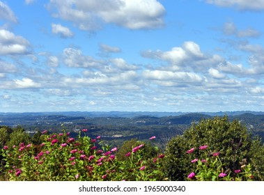 Overview on the Appalachian Mountains surrounding Kingsport, Tennessee gives majestic view of the city of Kingsport, Tennessee.  Pink zenias bloom and blue sky and clouds.