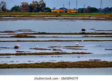 Overview on the pond of the WWF Oasis of Padule Orti Bottagone with flamingos Tuscany Italy
