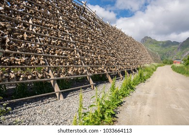 overview of racks for drying stockfish in Svolvaer at Lofoten in Norway