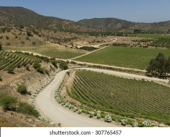 Overview of vineyards in Casablanca Valley, Chile