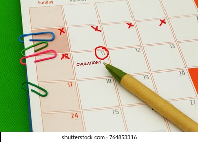 Ovulation day circled in red ink on calendar. Concept of fertility and family planning