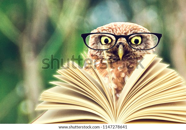 An owl animal with glasses is reading a book in the woods for an education or school concept.