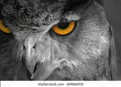 Owl Background - Selective Coloring of an Icon - Golden Eye