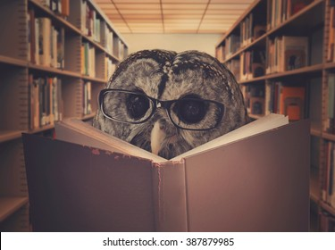 An owl bird is wearing eye glasses and reading a library book for an education, creativity or learning concept.