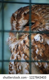 owl in cage
