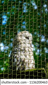 Owl in the cage. Animal in captivity looking through the bars of a cage in the zoo. Animal behind cage in zoo. Cool for illustrations about animal rights.