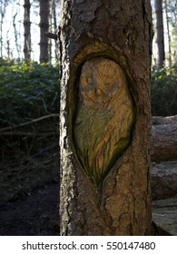 Owl calved into a tree trunk with bark outlining and forest in the background
