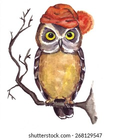 Owl in a cap sitting on a branch