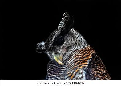 Owl in a darkroom