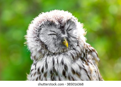 Owl enjoys the sun of spring