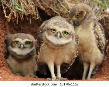 owl family at sweet home