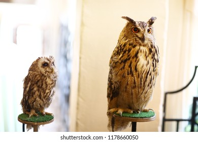 owl and filin close up photo as ttraction on kids birthday party