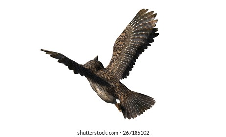 Owl in fly - seperated on white background
