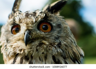 Owl in the forest, close up portrait of an owl