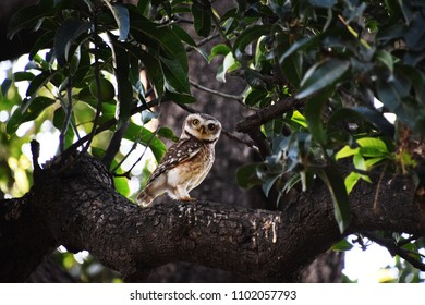 Owl and green leaves