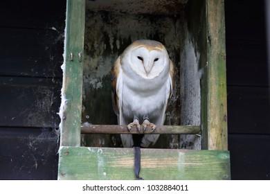 An owl inside a bird box