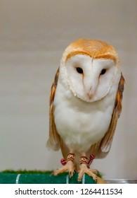 owl in the interior