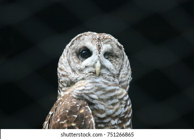 An owl missing one eye.