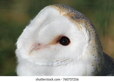 Owl nature bird