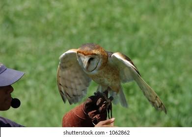 owl on trainer's glove