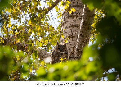 An owl peering down between the branches of a tree on a sunny day