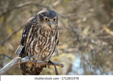 the owl is perched on a branch