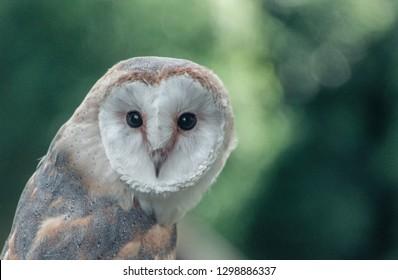 Owl posing to the camera